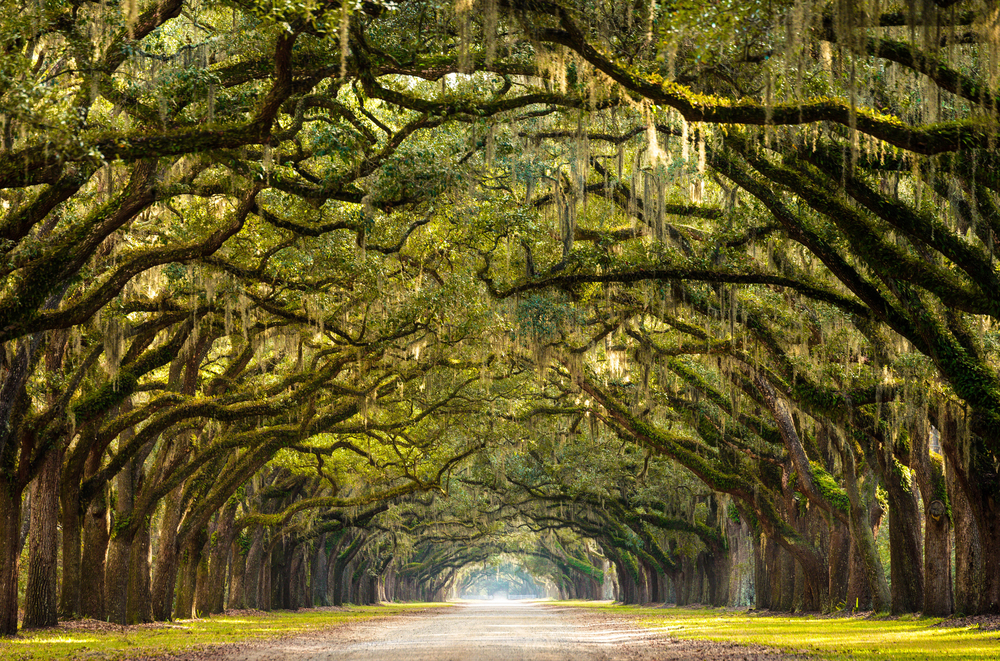 discover some of the best places to visit in the south USA