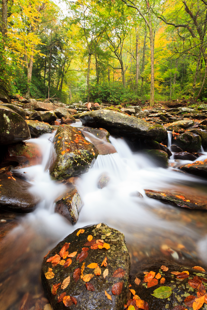 Beautiful river in the Great Smokey Mountains National Park.