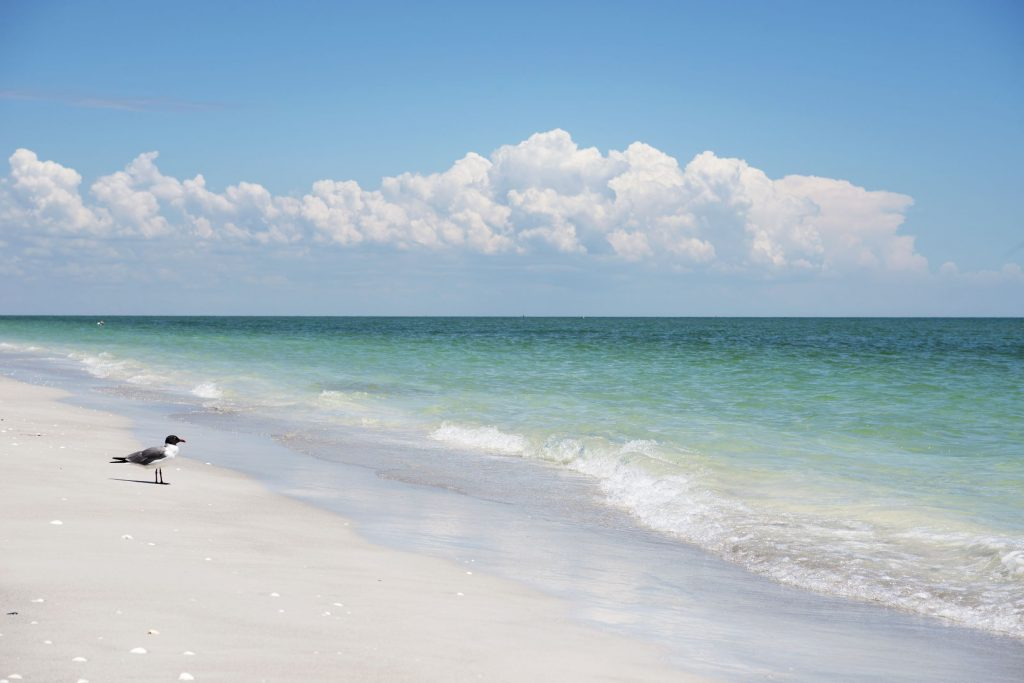 Photo of the beach on Sanibel Island, FL.