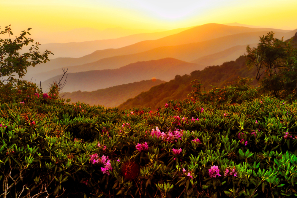 green mountain at sunset dotted with pink flowers weekend getaways in Tennessee