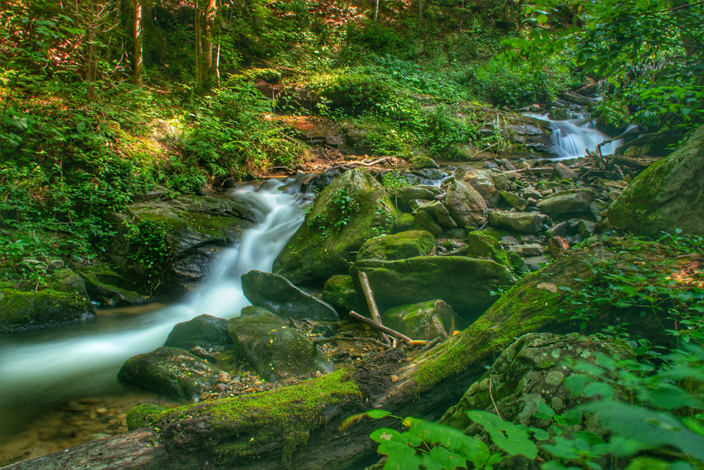 Amicalola Falls in the summer surrounded by lush greenery and moss