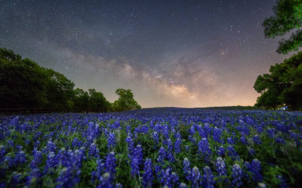 The Milky Way can be seen at dusk over a bed of Bluebonnets in Texas.