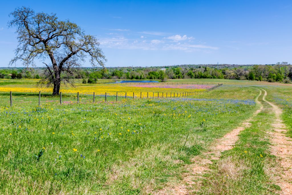 Bluebonnets and other wildflowers grow next to a dirt trail in Llano, Texas.