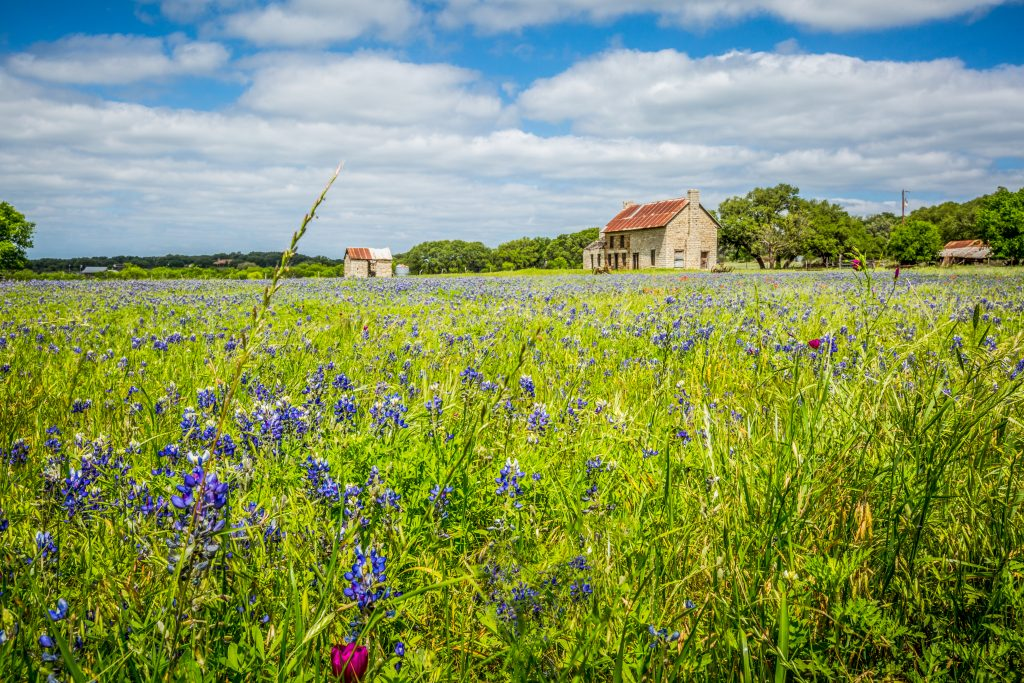 The Bluebonnet House is surrounded by fields of wildflower.