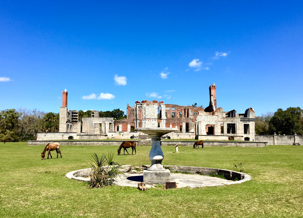 The Dungeness Ruins on a sunny day with wild horses grazing on the front lawn a perfect stop on an abandoned places in Georgia road trip
