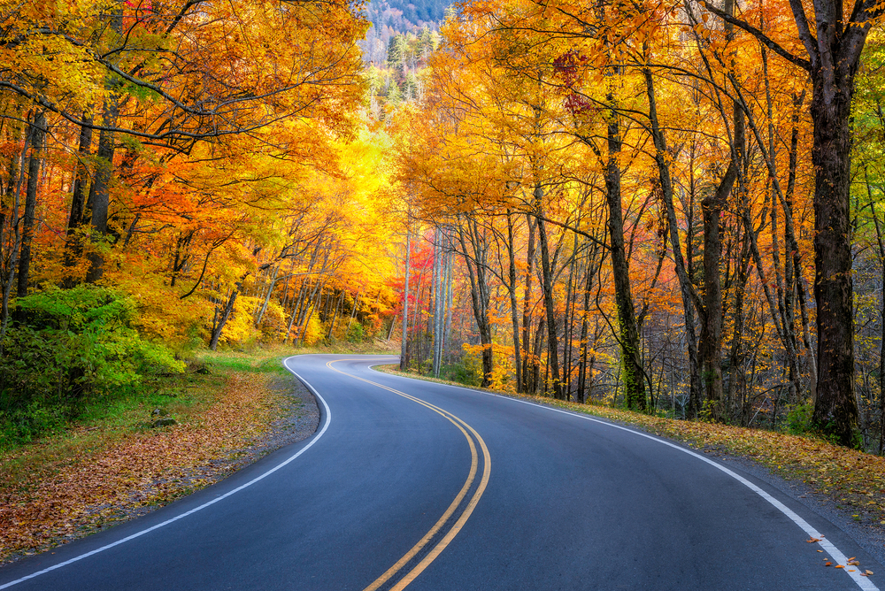 A road in the great smoky mountains surrounded by trees with yellow, orange, and red leaves in the fall.
