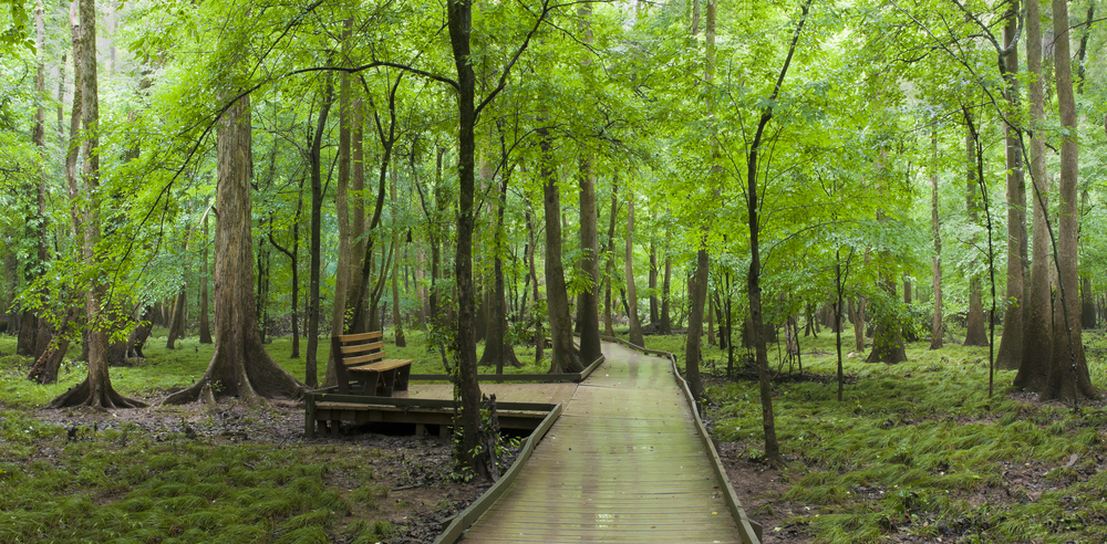 This national park is special because it has the largest intact expanse of of old growth bottomland hardwood forest remaining in the southern US