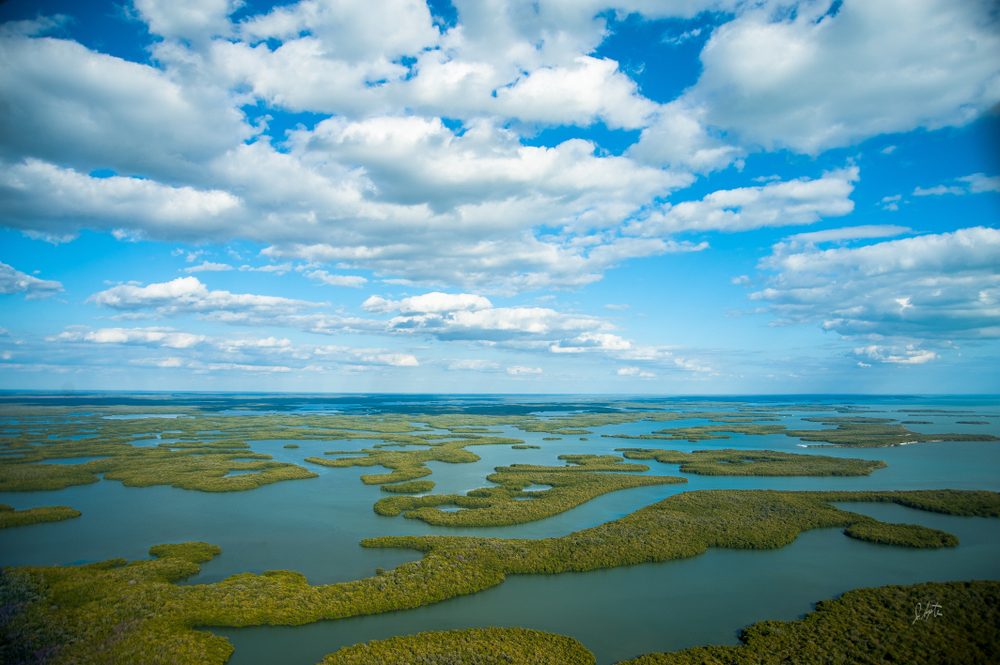 The Everglades National Park is the largest subtropical wilderness in the United States and spans across 1.5 million acres!