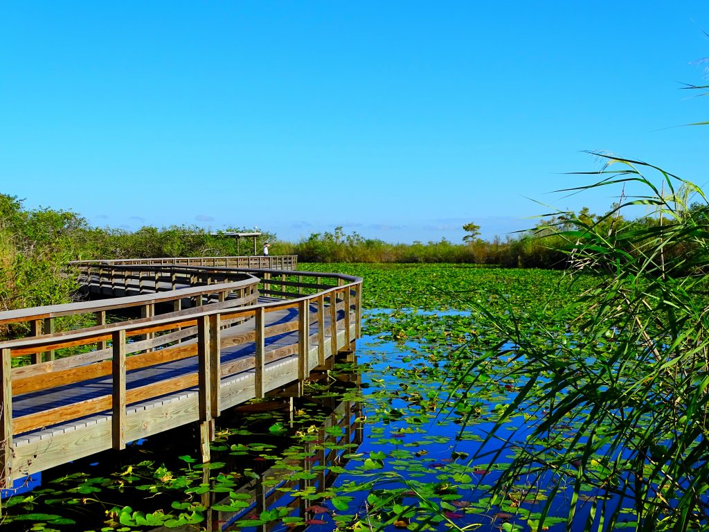 The Anhinga Trail through the Everglades, a stop on one of the Southern road trips through Florida.