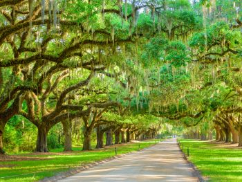 avenue of the oaks something to see on a southern USA road trip