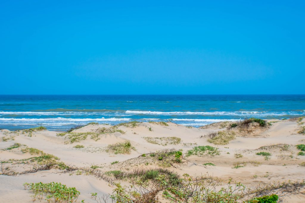A picture of sandy dunes and the ocean on South Padre Island Beach. One of the prettiest beaches in Texas