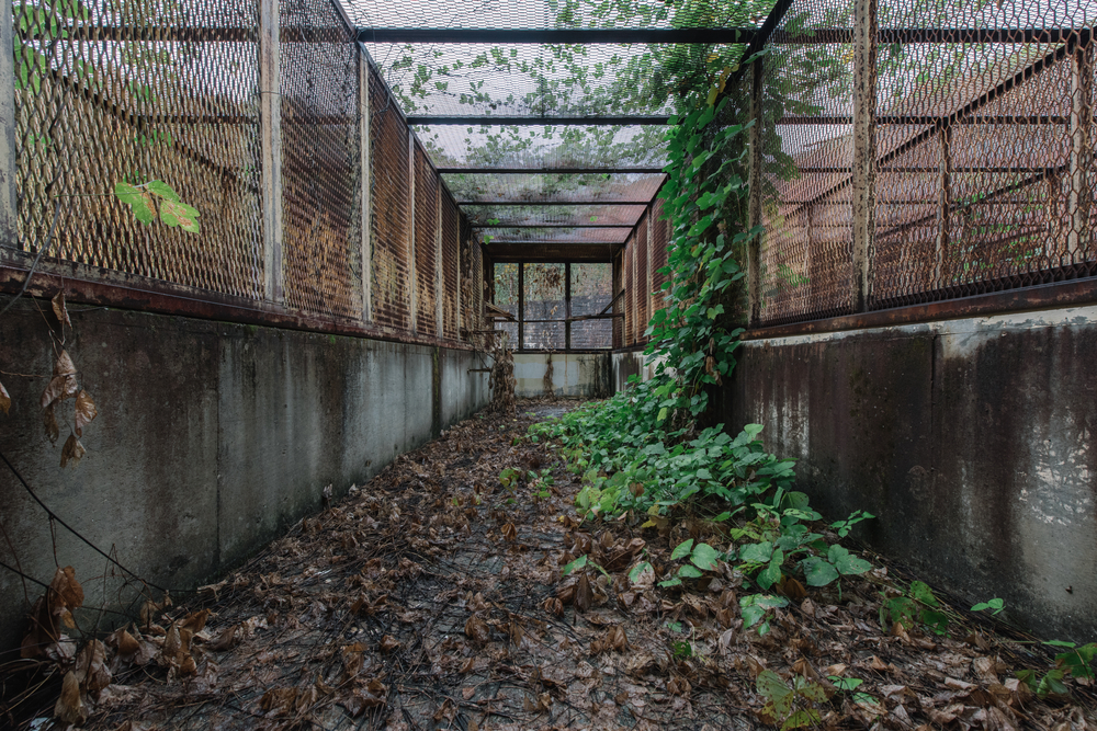 creepy penitentiary with overgrown plants is one of the most haunted places in the south