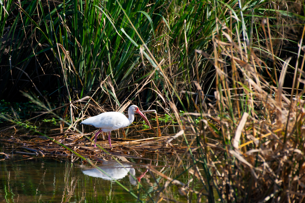An egret at Meaher State Park in Alabama.