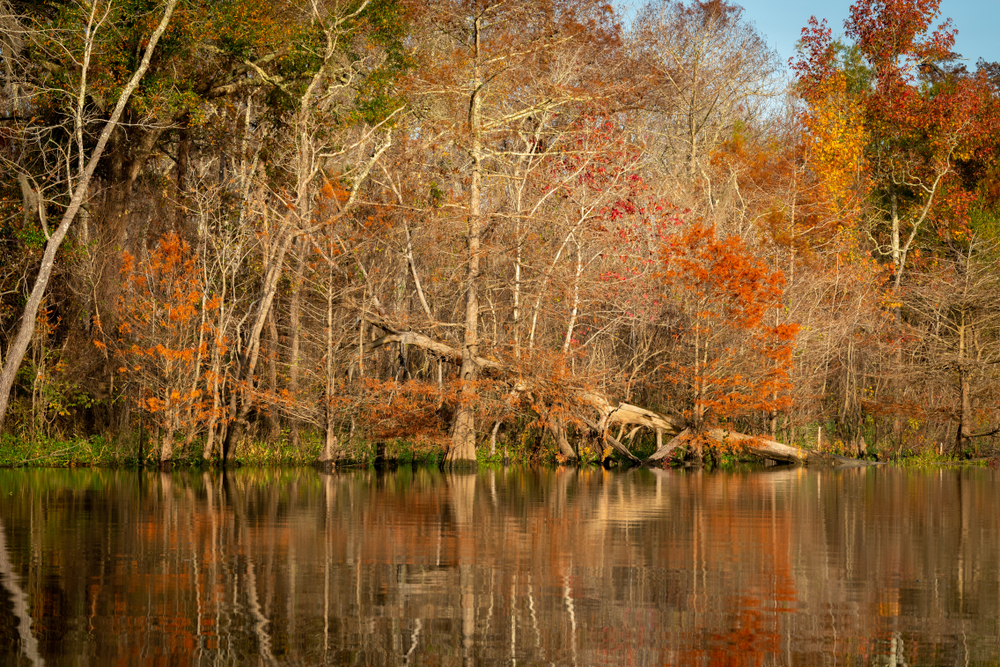 A lake surrounded by fall colors located within Big Thicket National Preserve