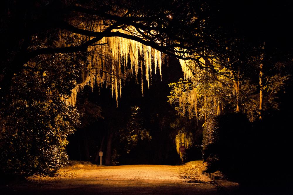 Spanish moss looks creepy at night.