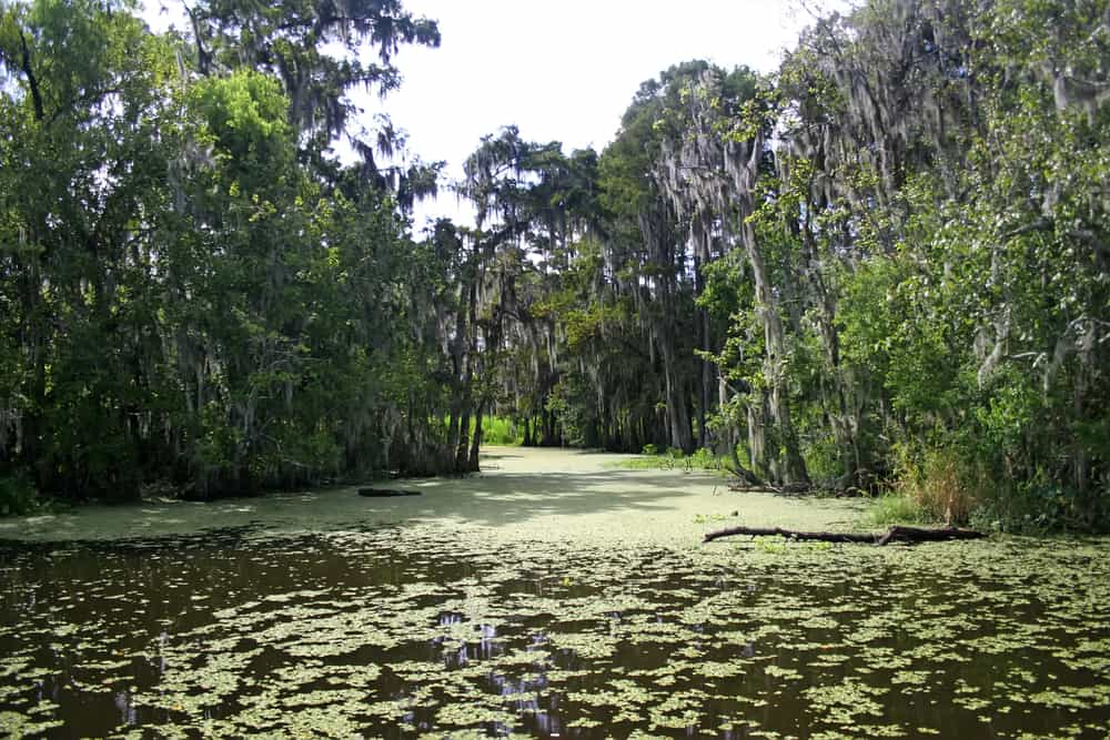 A Louisiana Bayou perfect for taking an airboat swamp tour