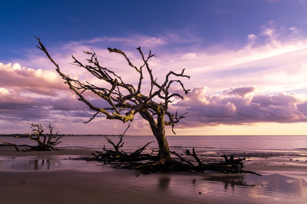 Driftwood Beach in Georgia where the Walking Dead was filmed