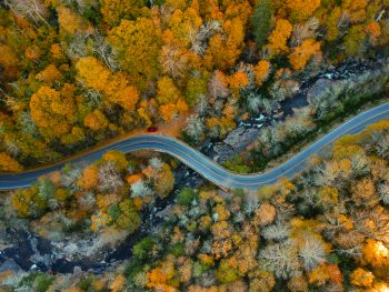 A road winds through the trees of North Carolina.