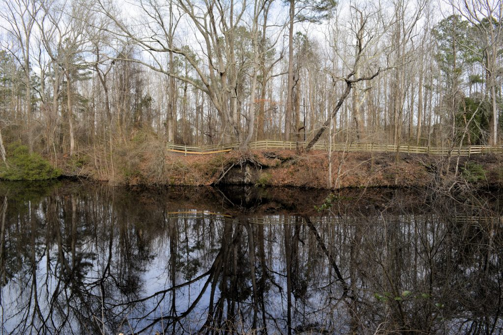 The Great Dismal Swamp, a perfect spot on a haunted North Carolina road trip.