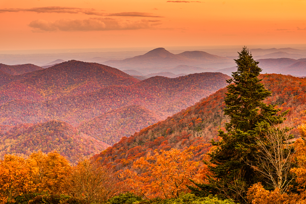 Photo looking from the summit of Brasstown Bald over a sea of mountain ridges all covered in bright reds, oranges, and yellows of Georgia's fall foliage. A tall evergreen stands towering over the closest trees offering a contrast of colors.