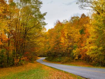 A photo of a North Carolina road passing through a forested area on the Blue Ridge Parkway in the fall.