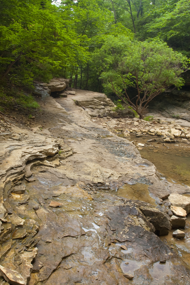 A photo of a creek running through Hemmed-in Hollow Falls Trail, one of the best hikes in Arkansas.