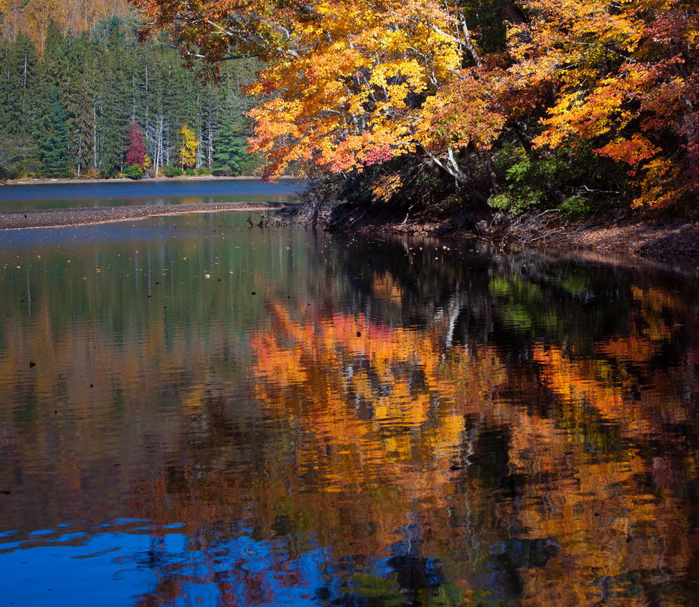 A photo of orange and yellow leaves draping over Lake Lure during fall in North Carolina.