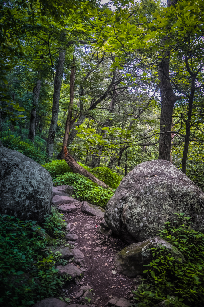 A photo of a forested and rocky path on Sharp Top Trail, one of the most scenic Blue Ridge Parkway hikes.