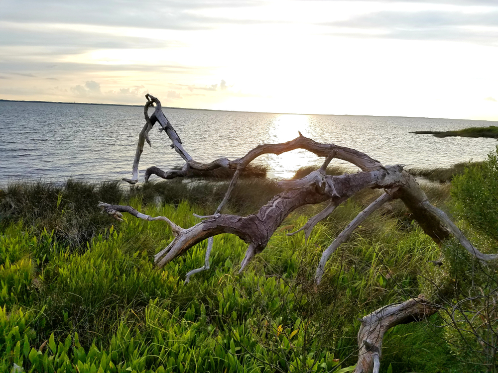 Photo of the shore at sunset on Currituck Sound, one of the best places to visit in the Outer Banks.