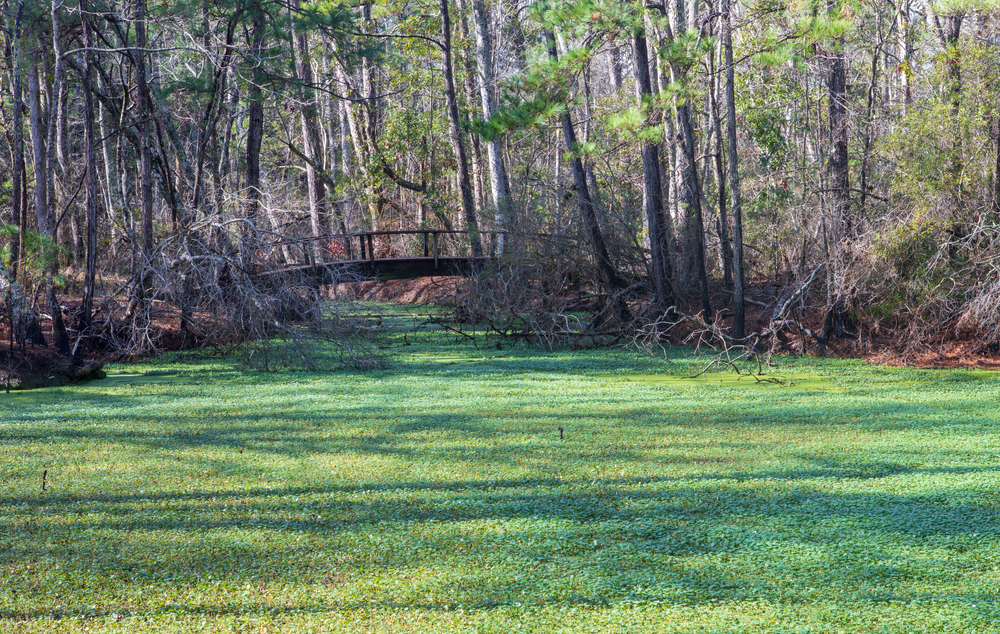 Photo of the Nags Head Woods Nature Preserve.