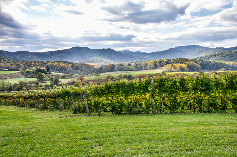 Visiting vineyards is a fun thing to do on a weekend trip in Virginia.
