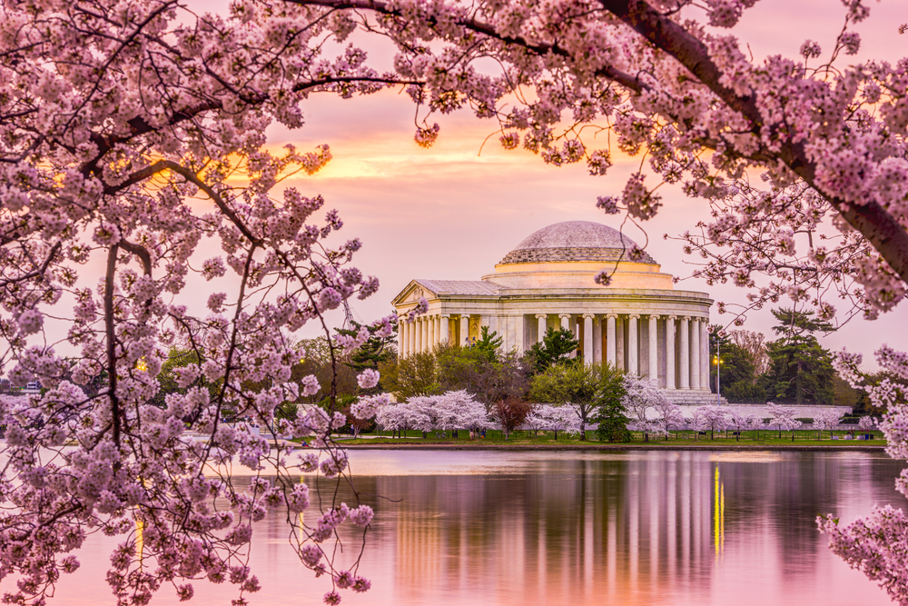 Washington D.C. is a must visit place in the spring.