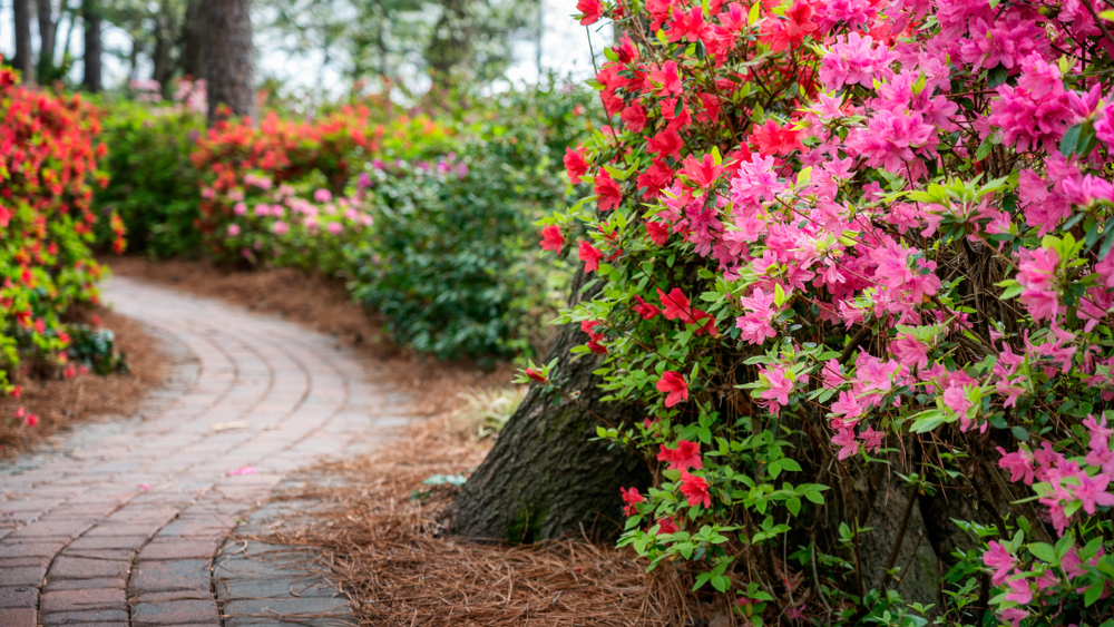 brick walkway surrounded by flowers