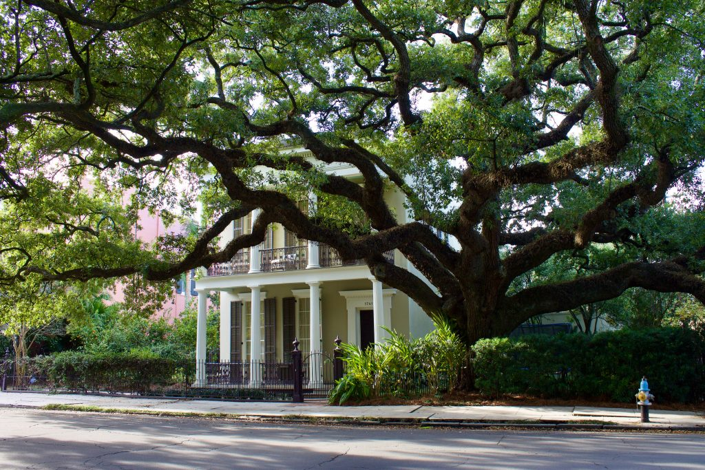 A beautiful Oak tree shadows a mansion in the spring, the best time to visit New Orleans.