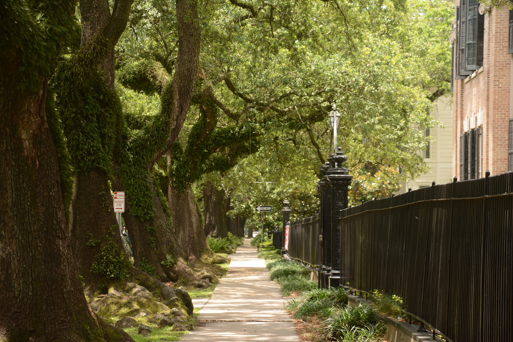 A sidewalk shaded by many oak trees in New Orleans