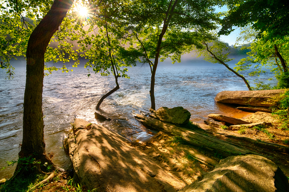 Photo of the river bank on the Chattahoochee River.