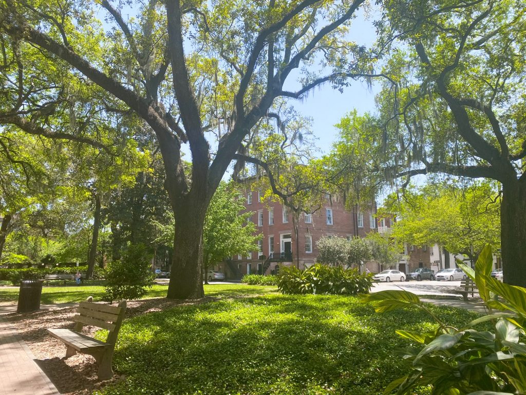 Ogelthorpe Square in Savannah on a sunny day. There is a large grassy area, nice sidewalks, and lots of trees and shrubs. The trees have Spanish moss hanging from them. From the square, you can see historic brick buildings and cars.