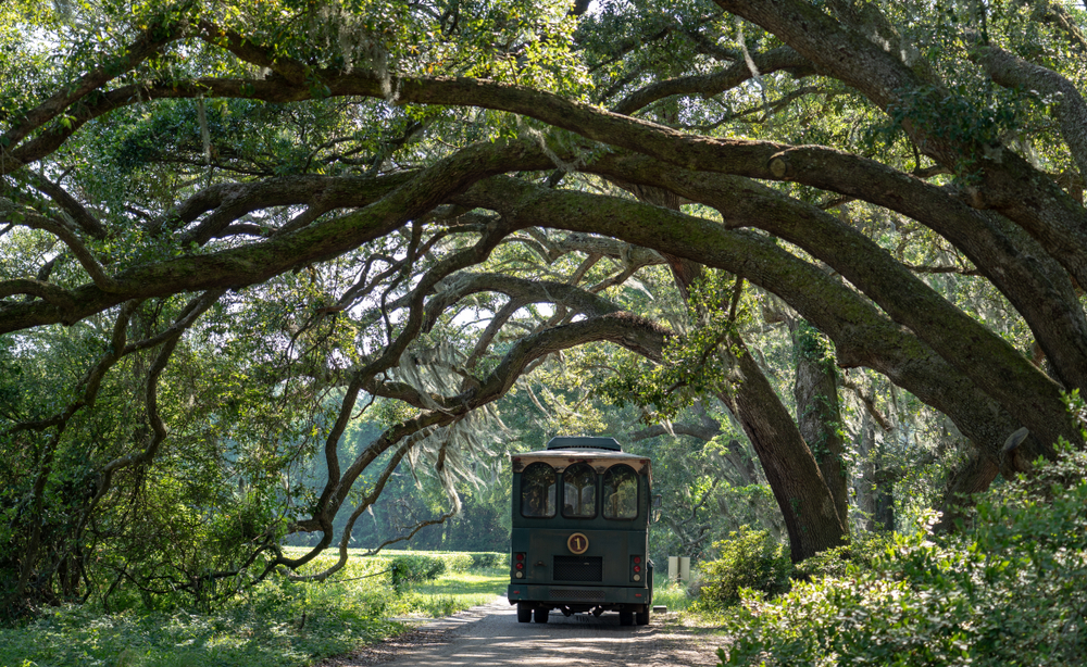 Photo of Charleston Tea Plantation one of the things to do in Charleston