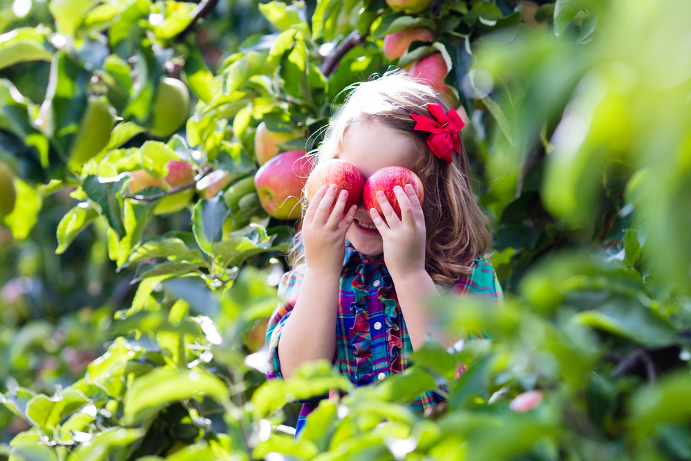 A photo of a young child playfully holding two red apples to their eyes and smiling with apple trees behind them.