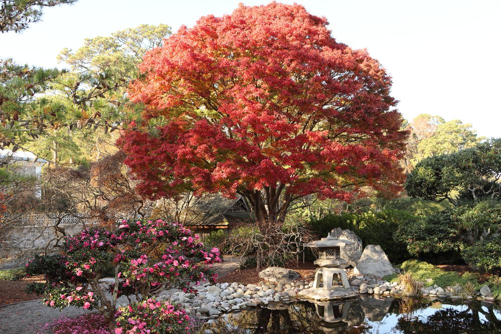 The Japanese Garden in Norfolk Botanical Gardens.