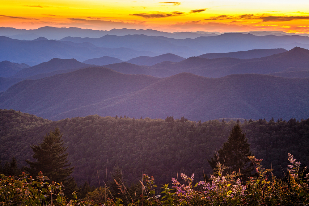A photo of a sunset on Cowee Mountain Overlook. The bottom framed with purple wildflowers and a sea of foggy mountains behind it.