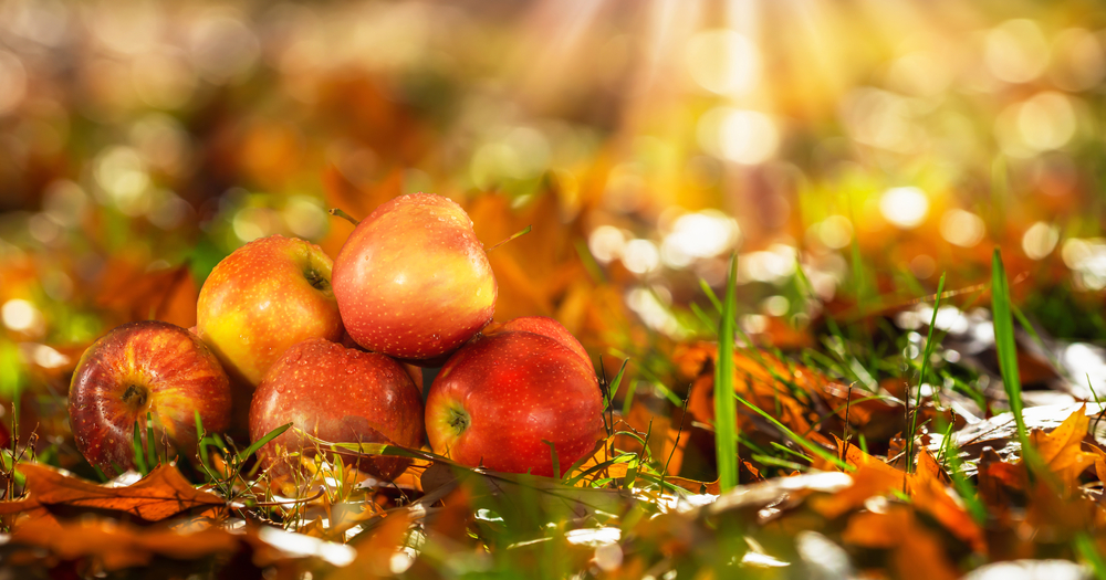 A photo of 5 red apples stacked on the ground surrounded by fall leaves.