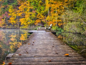 Boardwalk with a bench at the end overlooking a lake that's reflecting the trees during fall in Alabama.