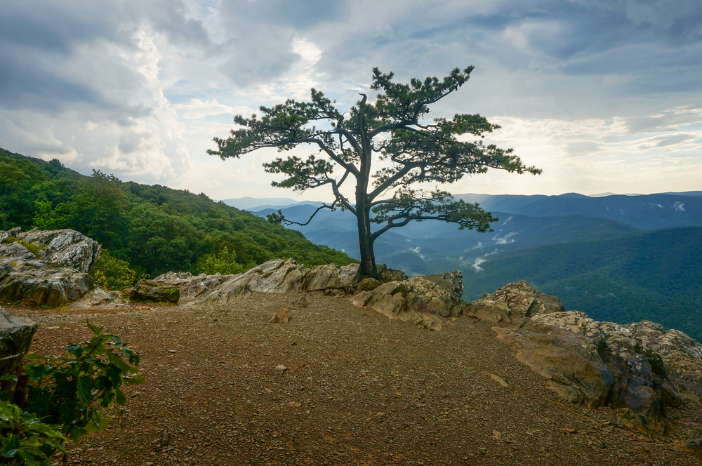 A solitary tree surrounded by rocks sitting high above the Blue Ridge Parkway's mountain range on Raven's Roost Overlook.