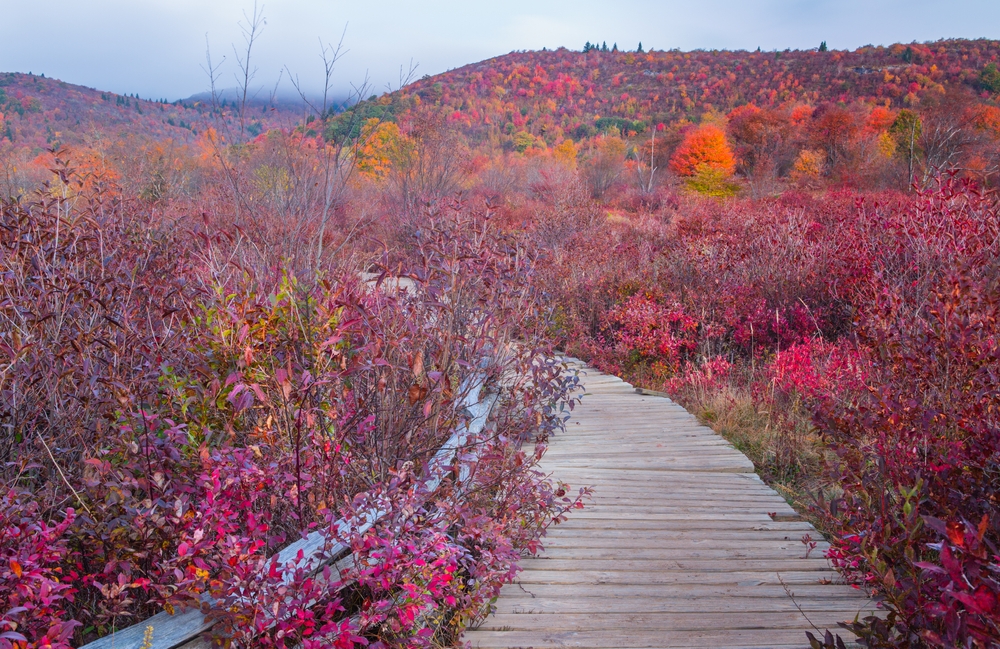 A wooden pathway going through the Graveyard Fields. There are bright pinkish red grasses surrounded the wooden pathway.