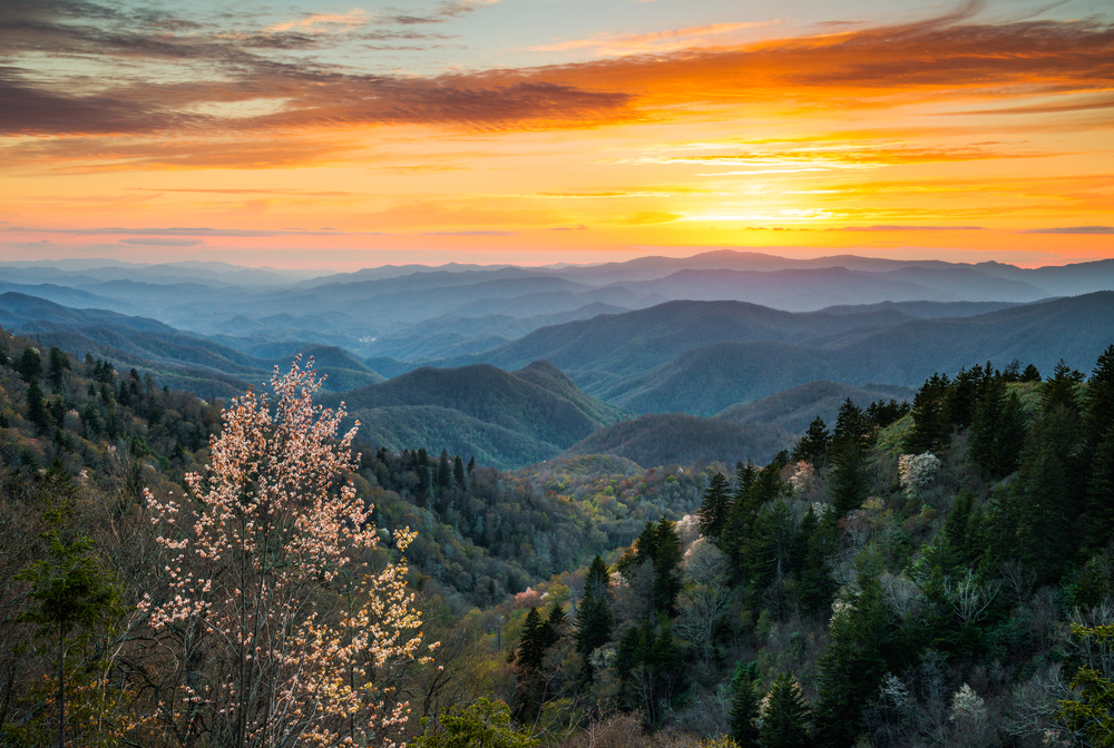 A view of the Great Smoky Mountains where they meet the Blue Ridge Parkway. It is sunrise and the sky is red, yellow, and orange. The mountains are mostly silhouetted and appear a smoky blue green color. You can see tall evergreens growing on the nearest mountains.