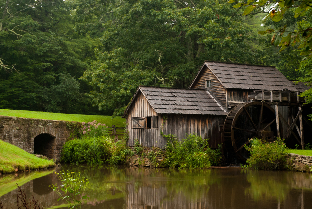 Mabry Mill in the summer. The mill is an old wooden water mill. It is surrounded by trees and a green lawn. There are also small shrubs with pale pink flowers on them.