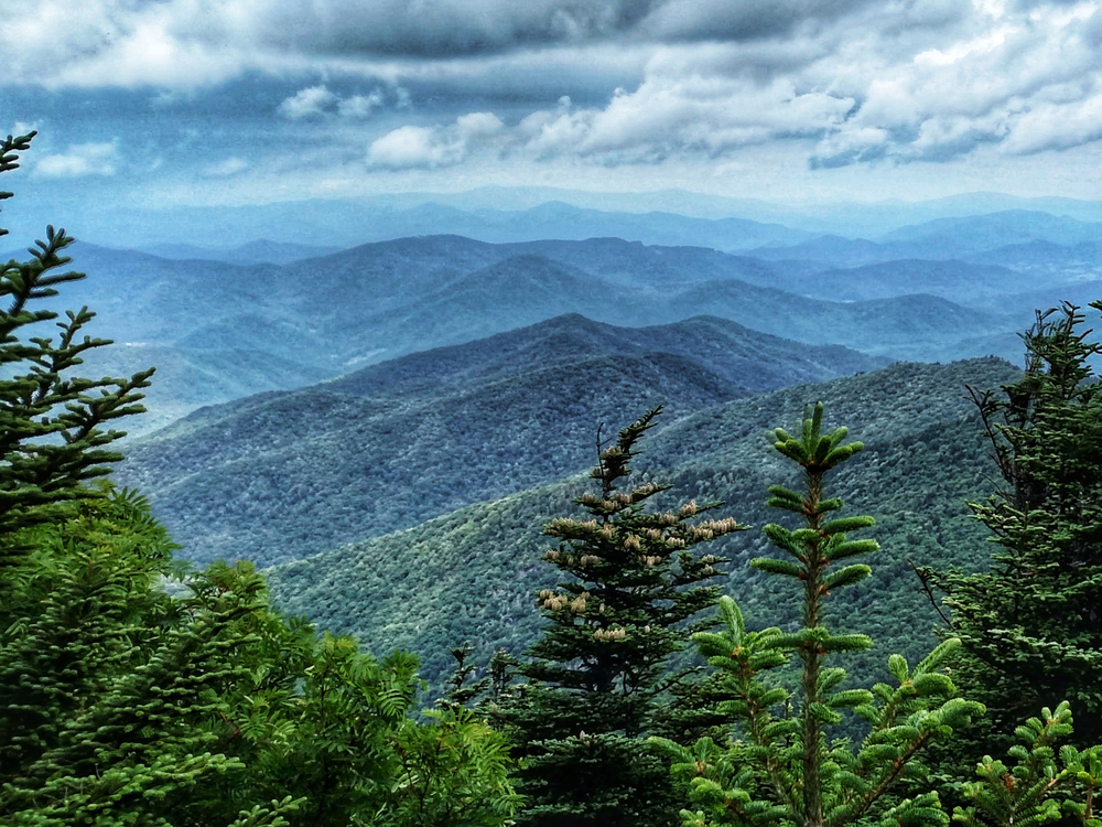 The view of Mount Pisgah and the Pisgah National Forest. The mountains look a bit blue-green and there are clouds hanging low near them. At the front of the image are large evergreen trees. It is one of the best stops on the Blue Ridge Parkway drive.