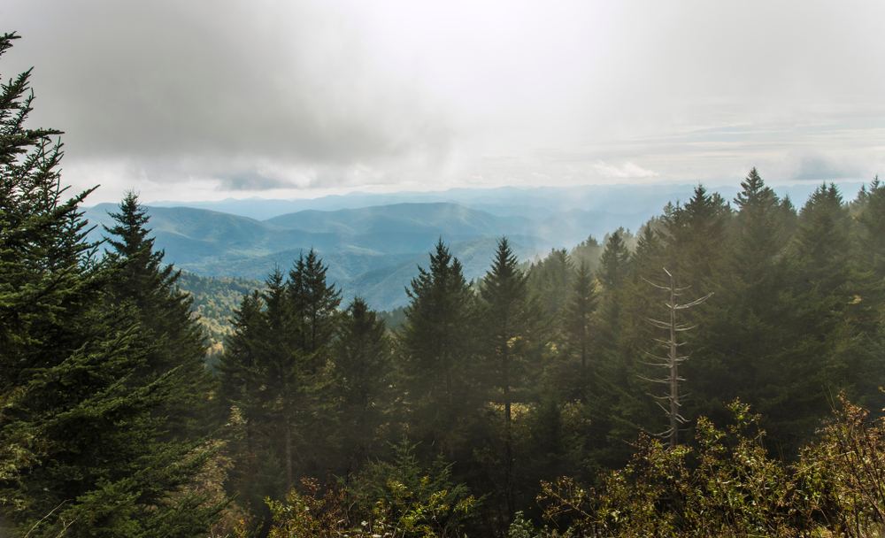 The view from the Richland Balsam Overlook, the highest point on the Blue Ridge Parkway. You can see mountains in the distance with low clouds hanging over them. In the front of the image are tall evergreen trees.