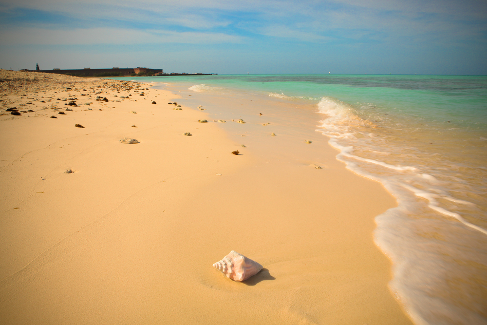 seashell on beach with blue water and fort in the background